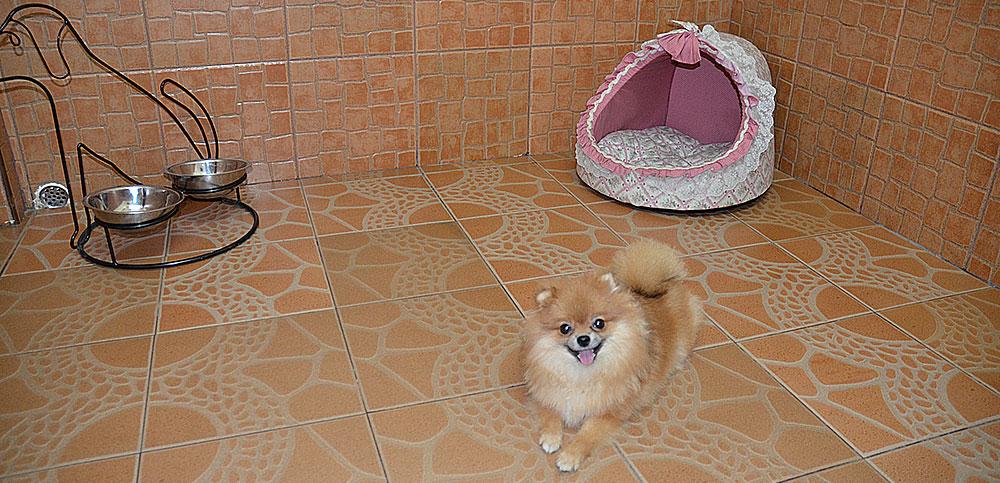 dog-hotel3