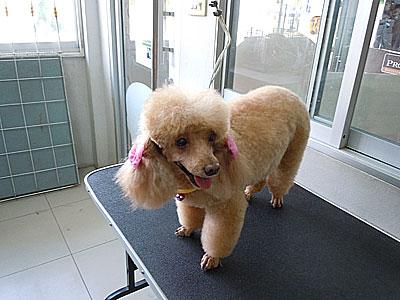 grooming-031